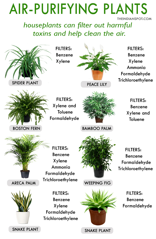 Best House Plants For Clean Air And Better Health