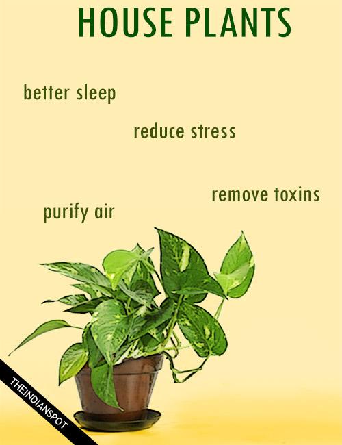 AMAZING HEALTH BENEFITS OF HOUSE PLANTS