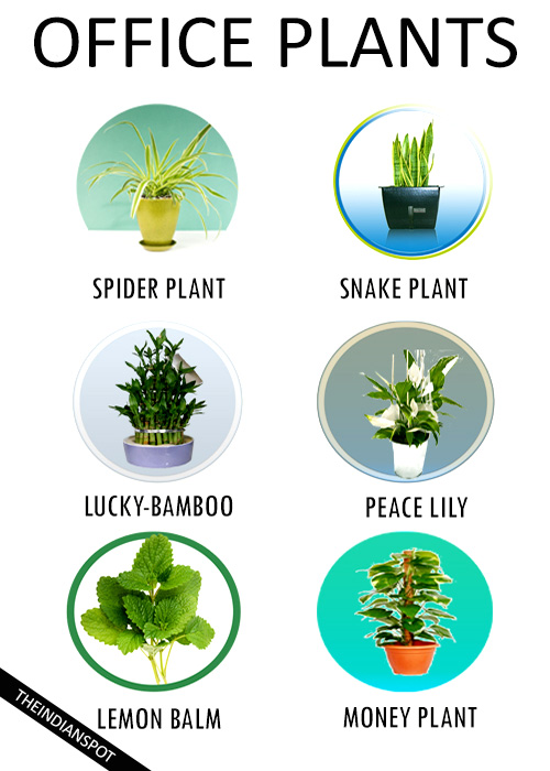 7 Best low-maintenance plants for the office