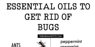 ESSENTIAL OILS TO GET RID OF BUGS