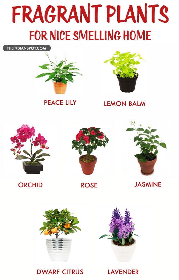 FRAGRANT HOUSE PLANTS FOR A NICE SMELLING HOME